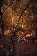 Shiloh Creek 2