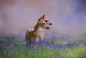 Twin Fawns In The Lavender