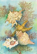 Shells in the Deep Green Sea