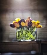 Cut Tulips On Edge Of Table