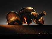 Mushroom On Ledge