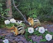 Morning Glory Chipmunks