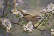 Wren And Apple Blossoms 2