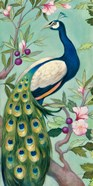 Pretty Peacock II