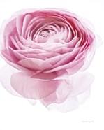 Pink Lady I