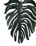 Tropical Palm II BW