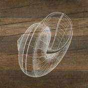 Rustic Nautilus - White