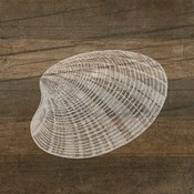 Rustic Shell - White