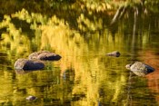 Reflection On Saco River
