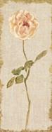 Pale Rose Panel on White Vintage v2
