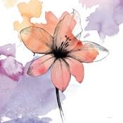 Watercolor Graphite Flower II