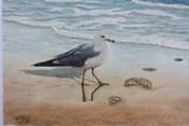 1 Seagull