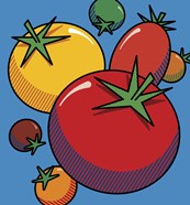 Various Tomatoes On Blue