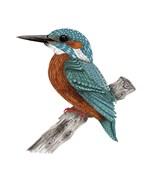 Mr Kingfisher