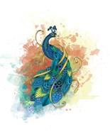 Mr Peacock
