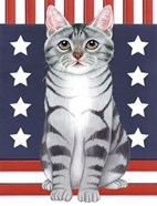 Patriot Cat