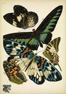 Papillons 10