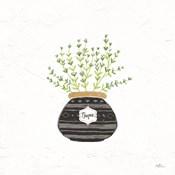 Fine Herbs VI