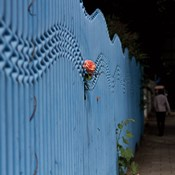 Rose on Pentonville