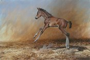 Foal Jumping For Joy
