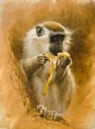 Green Monkey 11