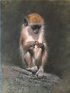 Monkey And Berries