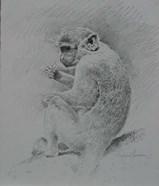 Monkey Sketch 2