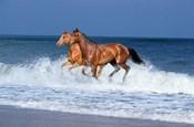 2 Horses Sea