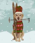 Yellow Labrador, Skiing