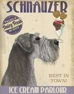 Schnauzer, Grey, Ice Cream