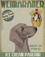 Weimaraner Ice Cream