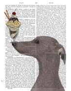 Greyhound, Grey, Ice Cream