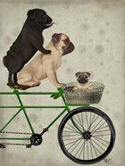 Pugs on Bicycle