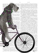 Schnauzer on Bicycle, Grey