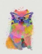 Rainbow Splash Pomeranian