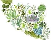 Succulent Field II