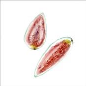 Love Me Fruit VI