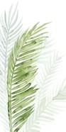 Faint Palms II