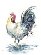 Rooster Splash I