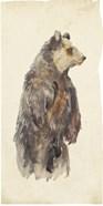Brown Bear Stare II