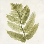 Forest Ferns I
