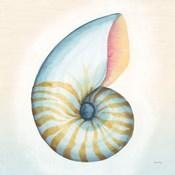 Boardwalk Nautilus