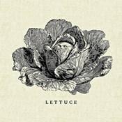 Linen Vegetable BW Sketch Lettuce