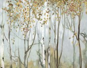 Birch in the Fog II