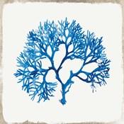 Blue Coral II