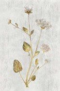 Botanical Gold on White I