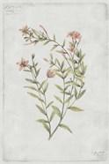 Botanical V