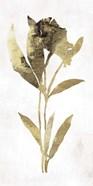 Gold Botanical III