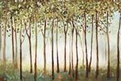Riverside Forest