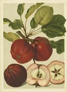 Red Veli Apples II